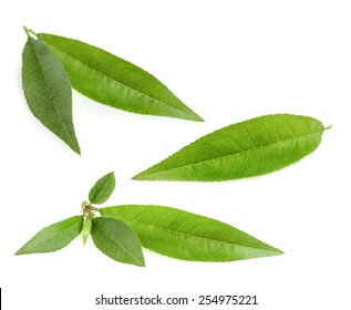 Peach leaf isolated on white background