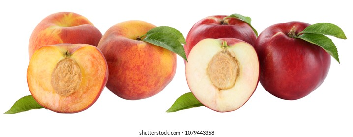 Peach peaches fruit fruits and nectarine nectarines isolated on a white background