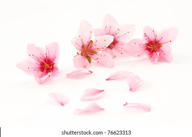 Peach pink flowers on a white background