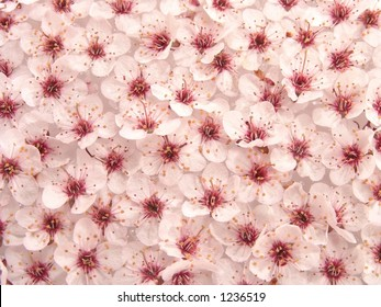 Peach Plum Flowers Pattern Abstract Background