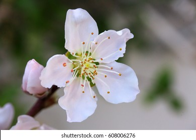 Peach Spring Flowers