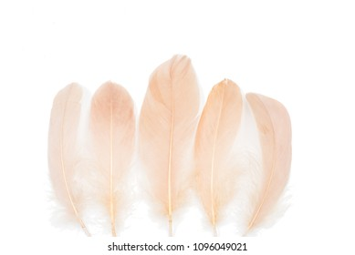 Peachy beige feathers on a white background
