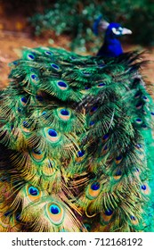 Peacock Cataract Gorge Launceston, Tasmania, Australia