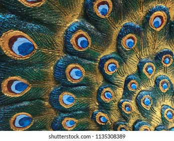 Peacock colorful feather background.