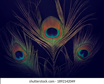 peacock feather background image isolated over black background