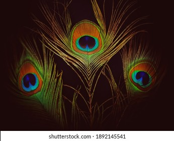 peacock feather background image isolated on black background