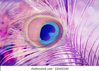 Peacock feather background./Peacock Feathers