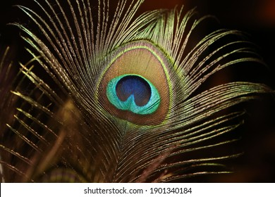 Peacock feather closeup texture, soft focus, Bright peacock feather on dark background.