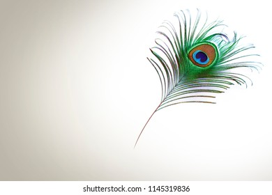 Peacock Feather design closeup on white background
