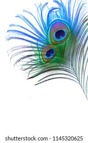 Peacock feather Design White Background