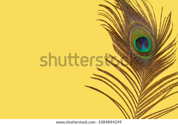 Peacock feather isolated on a yellow background, space for text