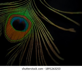 peacock feather isolated over black background.a single peacock feather backdrop with copy space.colourful plumage of peacock.closeup of peacock feather with different colours.