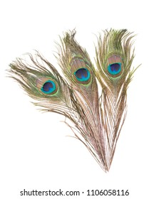 Peacock feathers isolated over white background