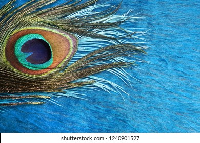 Peacock feathers on a blue background