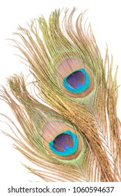 Peacock feathers on a white background