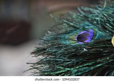 Peacock feature macro
