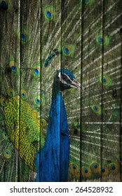 """""""peacock"""" Mural. The wood painting  concept"""