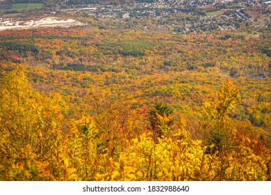 Peak fall foliage in the forest around Mount Greylock in North Adams, MA