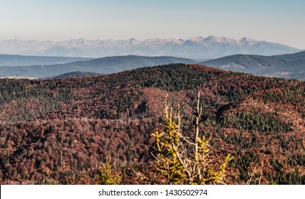 peaks of Tatra mountains with nearest lower hills covered by colorful forest from Velka Raca hill in autumn Kysucke Beskydy mountains on slovakian-polish borders