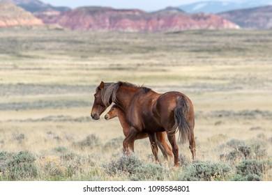 Peaks Wild Horses