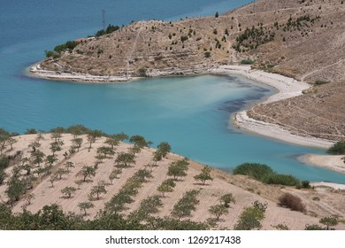 Peanut trees near a lake in Antep/Turkey.