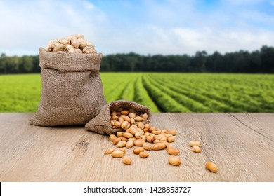 Peanuts in jute sack bag, background is peanut farm, roasted peanuts are poured and overturned