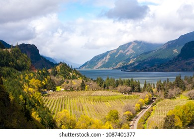 A pear orchard along the Columbia River in the Columbia River Gorge national Scenic Area, near Hood River, Oregon