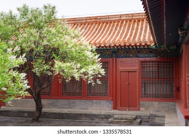 pear tree blossoming in Chinese traditional courtyard in early spring in the Forbidden City,Beijing,China