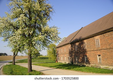 pear tree nearby a traditional farm house at the toursitic road moststrasse in the austrian district mostviertel