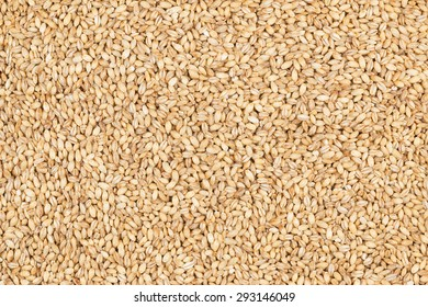 Pearl barley, as background, texture