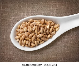 Pearl barley in white porcelain spoon / high-res photo of grain in white porcelain spoon on burlap sackcloth background