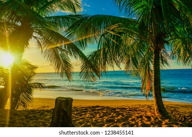 Pearl beach (la Perle) with coconut trees and sea at sunset in Deshaies, Guadeloupe, French West Indies