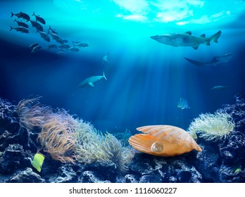 Image result for coral and pearl in the sea
