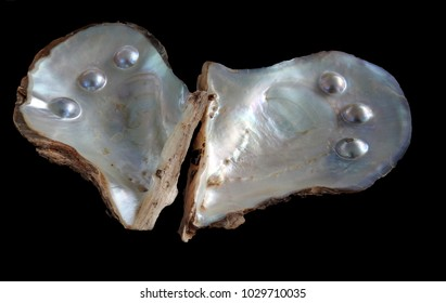pearl farm ,Western Australia showing blister pearls in shell.