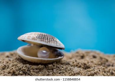 Pearl inside a seashell on the beach