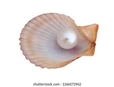 Pearl on seashell isolated