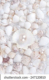 pearl in the shell against the sea shells and sand