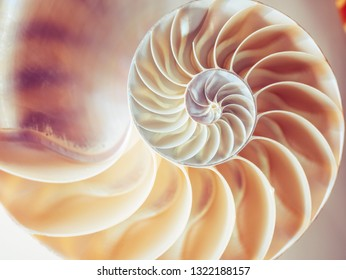 Pearl structure Nautilus symmetry cross section inside pattern Nature background texture