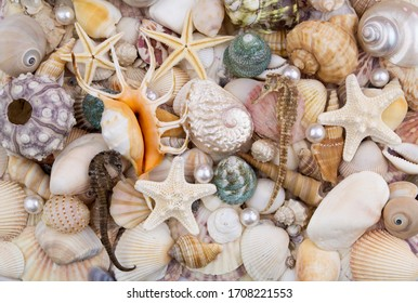 Pearls, seashells, starfishes with seahorse and sea urchin