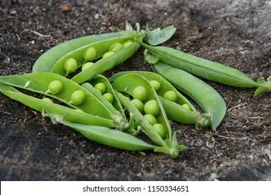 peas pods on wood