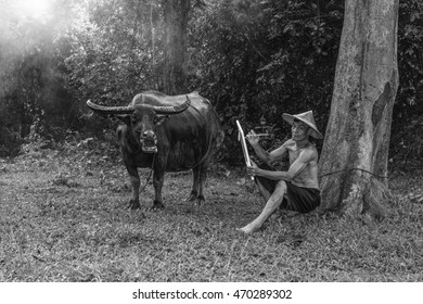 Peasant farmers, drawing Buffalo, Way of life Countryside in thailand