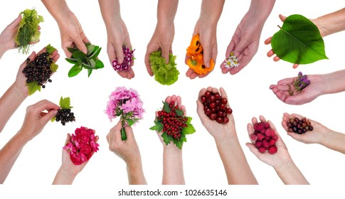 A peasant woman holding berries, flowers and plants in her hand. Big isolated on white studio set collage