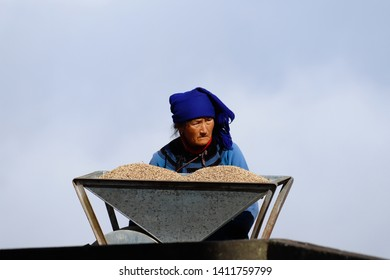A peasant woman working in the rice fields of Yunnan, China. The famous terraced rice fields of Yuanyang in Yunnan province in China. Yunnan, China - November, 2018