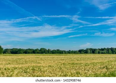 Peasantry with a summer wheat field. Location: Germany, North Rhine-Westphalia, Borken