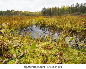 Peat bog in the autumn forest landscape