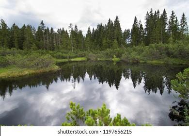 Peat bog in Bohemian Forest. Czech Republic.