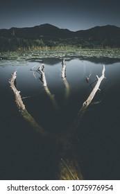 peat bog landscape - spring mood - desaturated style image
