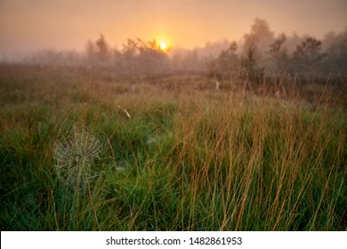 Peat bog in the morning, Germany
