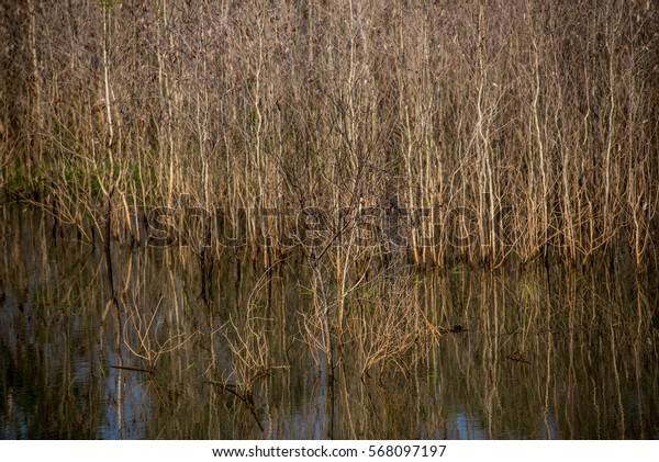 Peatlands flooding
