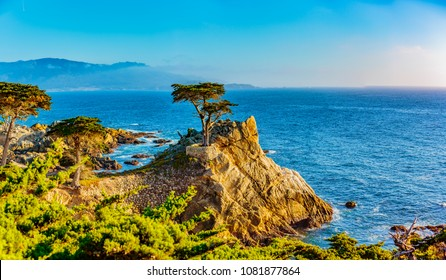 Pebble Beach, California, February 17, 2018:  The Lone Cypress is an iconic tree that stands on top of a granite outcropping in Pebble Beach, between Pacific Grove and Carmel-by-the-Sea.
